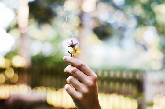 Dišave in naše razpoloženje…