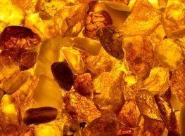 L'Occitane Terre de Lumière: Zlata ura v Provansi