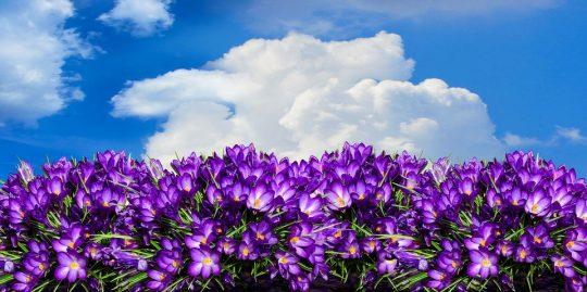 Pomladni dišavni horoskop (ostala znamenja)